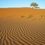 Trockenes Afrika