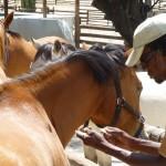 Pferdesterbe und Tetanus