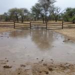 Pferdekral unter Wasser
