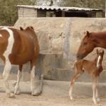 Torra und Sohn Toro