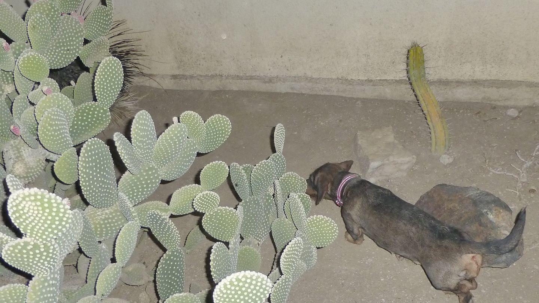 Berta und das Stachelschwein