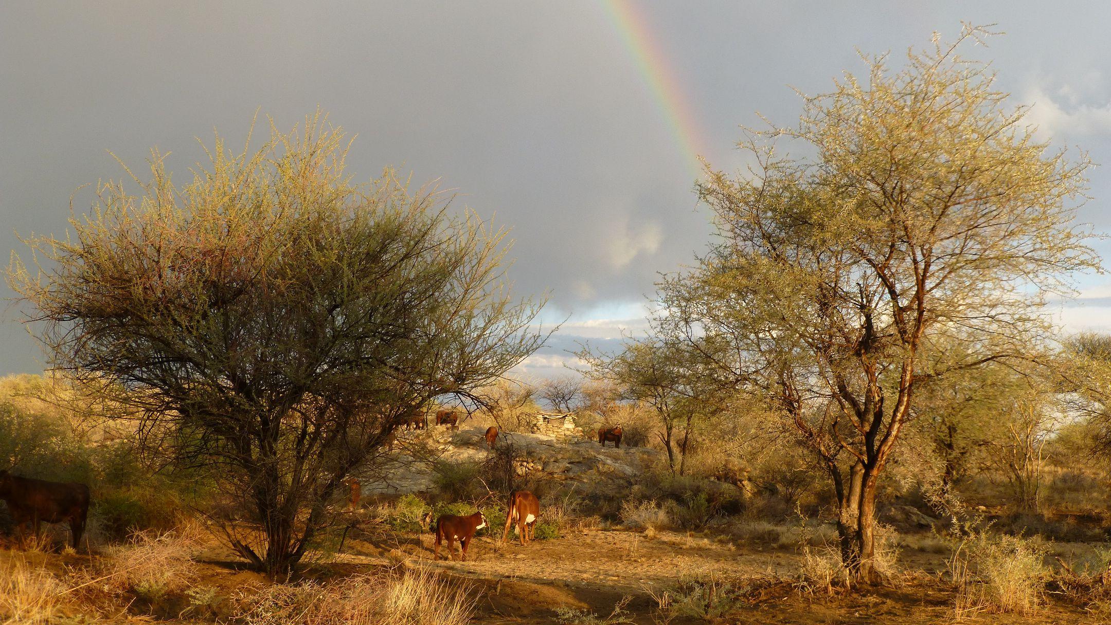 Regenbogen Ende Mai