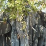 Viel Elefant - wenig Schatten