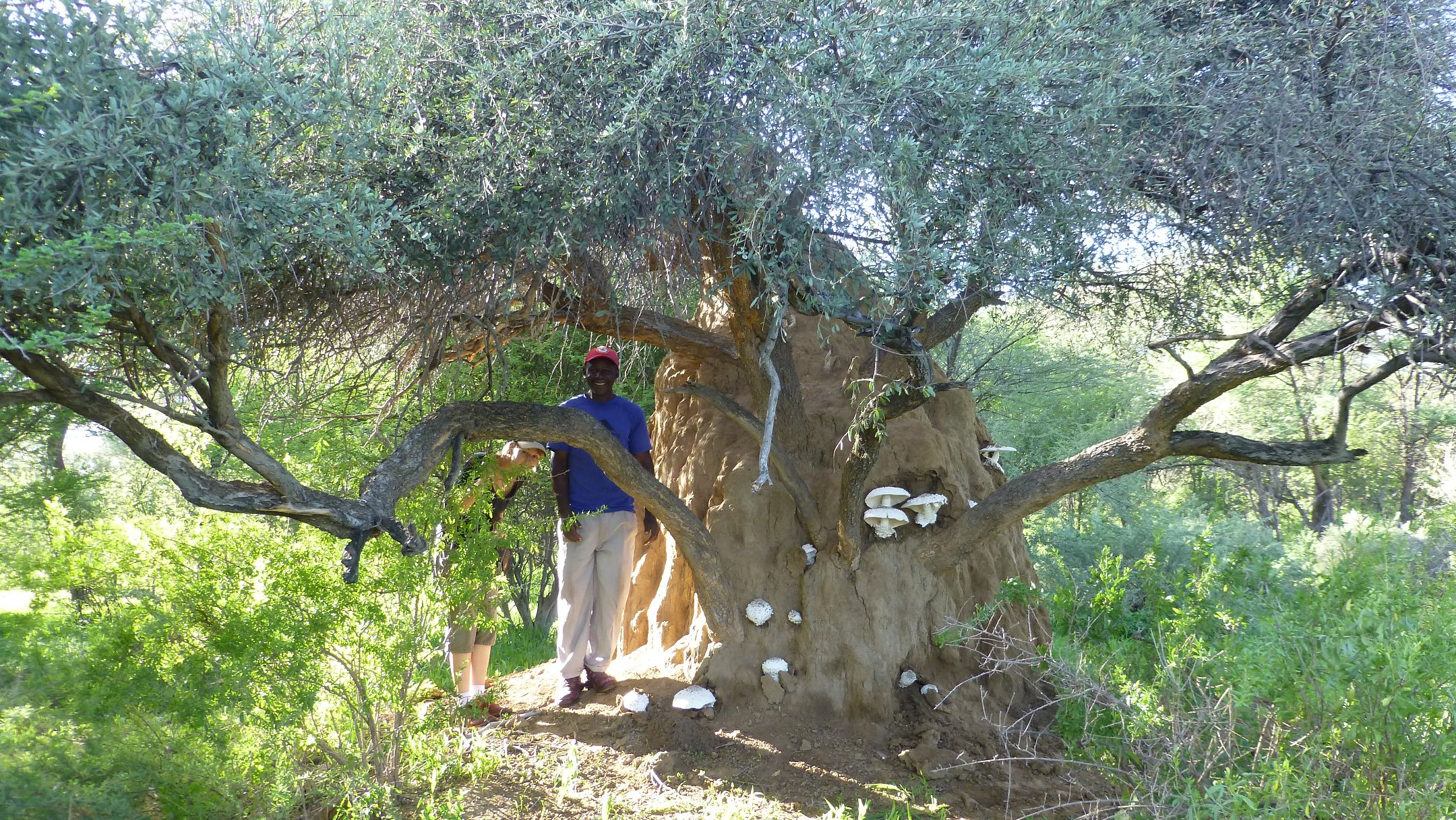 Termitenhügel mit Omayova