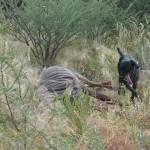 Sando und Blue Wildebeest