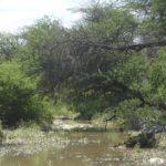 Kakadurivier