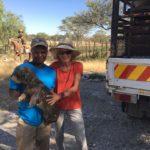 Der Schutz- und Wachhund bleibt daheim