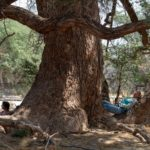 Im Schatten des Anabaums