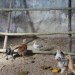Natürlich eine Hühnerleiter