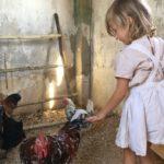 Hahn oder Henne?