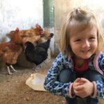 Hoffnung auf mehr Eier